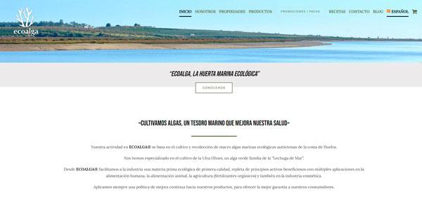 Creación de páginas web | Thunder Creativos